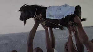 Hlas za kozu