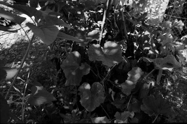 Záhradníkov fotoalbum